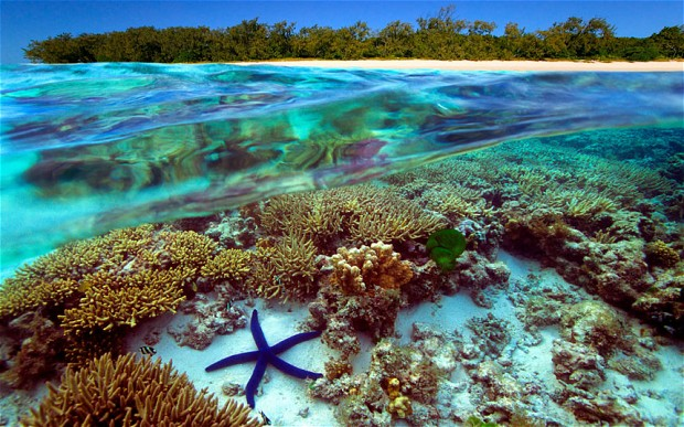Image result for Great Barrier Reef australia