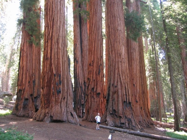 Sequoia National Park California USA Alterracc